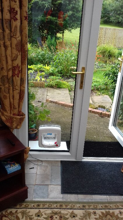 Cat flap installers Ulgham Northumberland, here installed in Ulgham